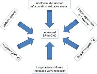 Pathophysiology of Hypertension in Chronic Kidney Disease