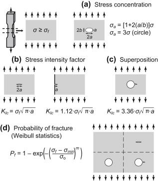 Mechanical Characterization of Biomaterials - ScienceDirect