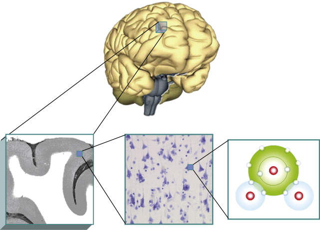 Brain Imaging An Overview Sciencedirect Topics