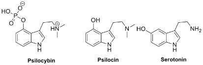 Psilocybe - an overview   ScienceDirect Topics