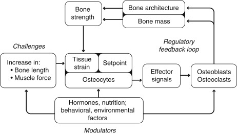 Osteoporosis in Childhood and Adolescence - ScienceDirect