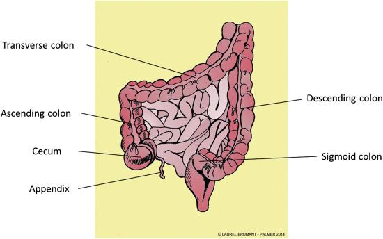 Sigmoid Colon - an overview | ScienceDirect Topics