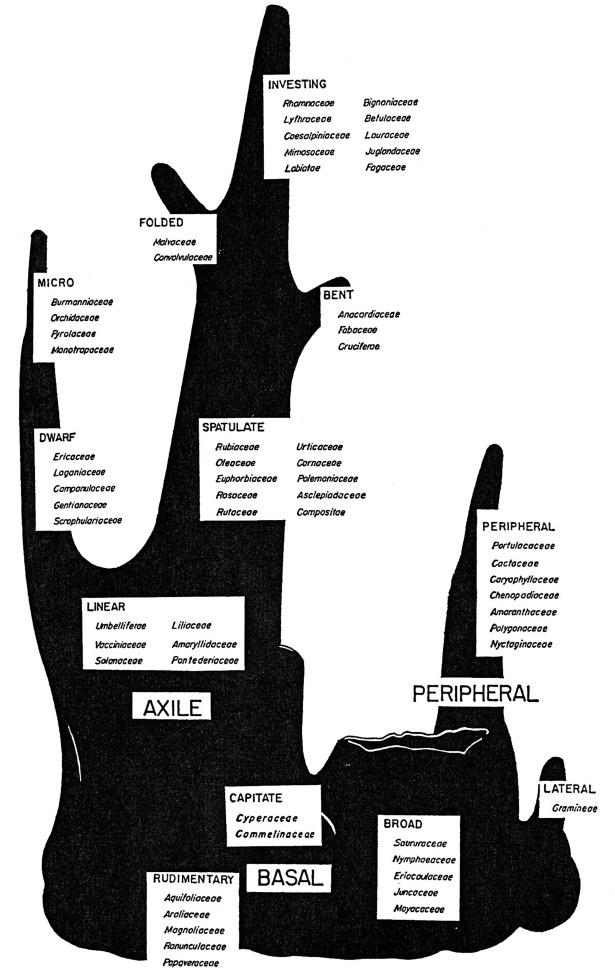 Gnetaceae - an overview | ScienceDirect Topics