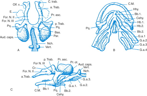 Cartilage An Overview Sciencedirect Topics