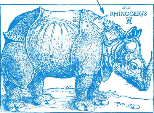 Ceratotherium simum - an overview | ScienceDirect Topics