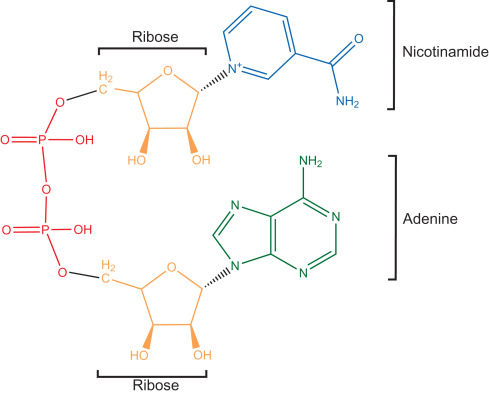 Schematic diagram of Glycerol and TAG synthesis. Metabolites: G1P ...