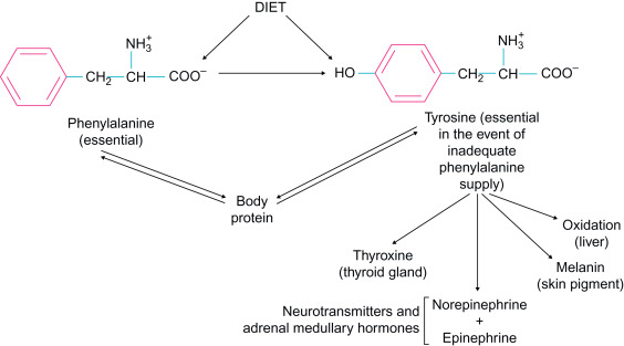 Phenylalanine - an overview | ScienceDirect Topics