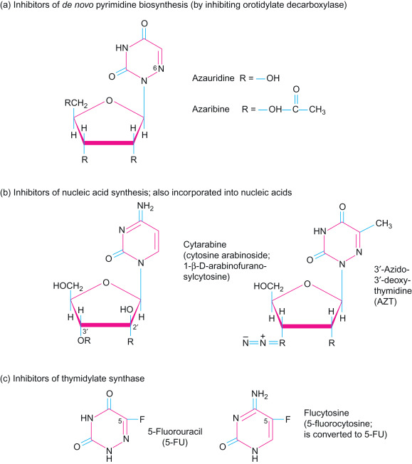 pyrimidine nucleotide an overview sciencedirect topics