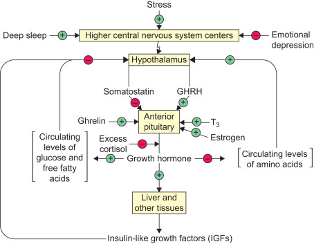 Protein Sparing - an overview | ScienceDirect Topics