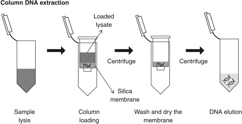 Dna Extraction Finding The Most Suitable Method Sciencedirect