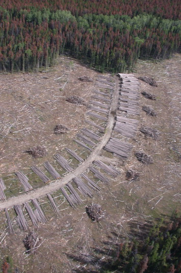 Salvage Logging - an overview | ScienceDirect Topics