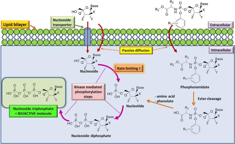 Idoxuridine - an overview | ScienceDirect Topics