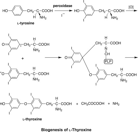 Alkaloids Derived From Phenylalanine And Tyrosine Sciencedirect
