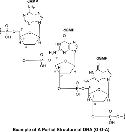 Alkaloids Derived From Nucleic Acids And Related Compounds