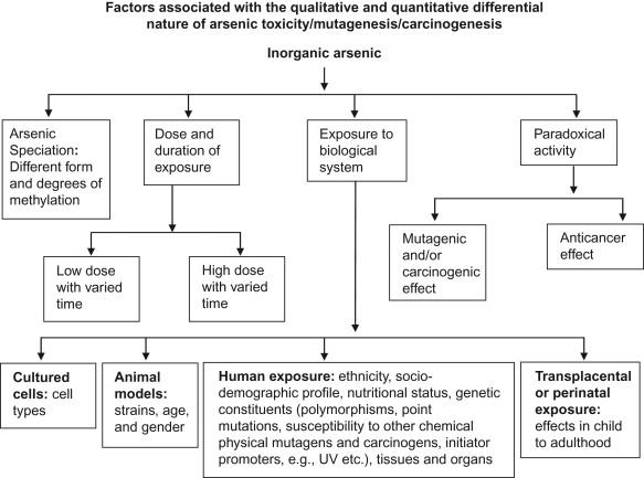 Chemical Carcinogenesis and Mutagenesis I