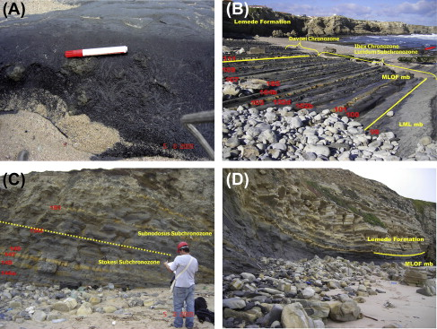 Facies and Carbon Isotope Chemostratigraphy of Lower Jurassic