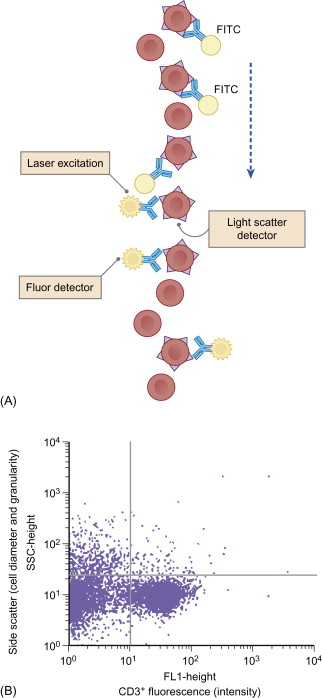 Fluorescence Activated Cell Sorting - an overview