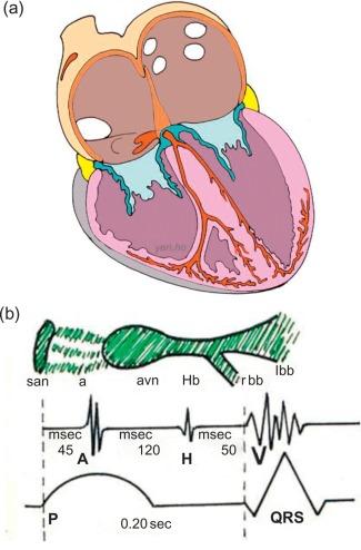 normale und anomale menschliche hmoglobine marti h r