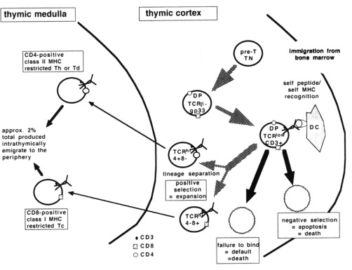 Antibody Molecules And The Immune Response Theoretical Background