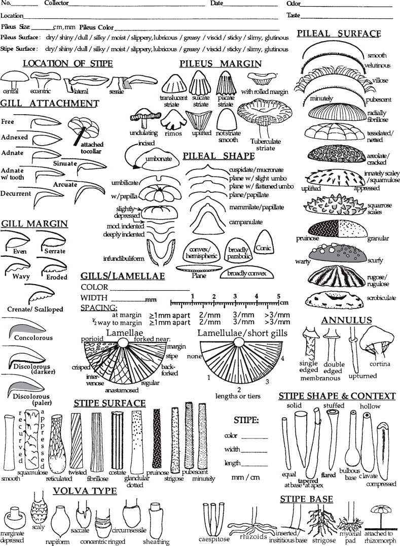 Agaricales - an overview | ScienceDirect Topics