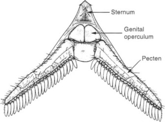 Opisthosoma - an overview | ScienceDirect Topics