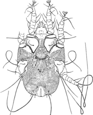 Ear Mite - an overview | ScienceDirect Topics