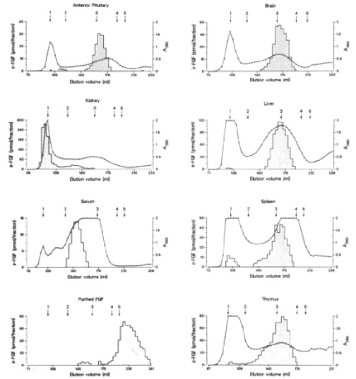 Molecular Characterization Of Fibroblast Growth Factor Distribution