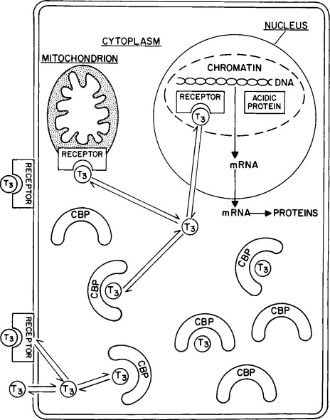 Identification Of The Cis Acting Elements And Trans Acting Factors