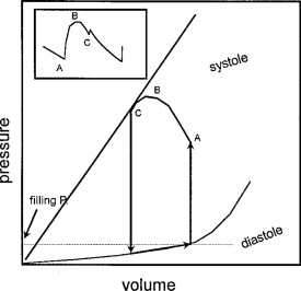 Muscle Isotonic Contraction - an overview | ScienceDirect Topics