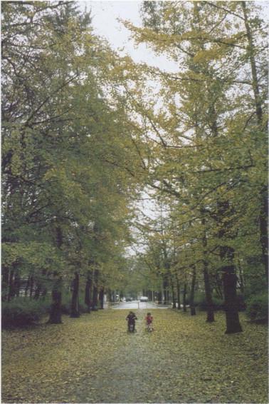 Deciduous Tree - an overview | ScienceDirect Topics