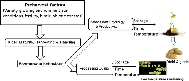 Factors affecting the postharvest behavior and quality of stored tubers.  sc 1 st  Science Direct & Postharvest Storage of Potatoes - ScienceDirect