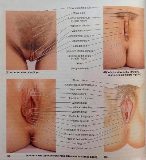 person mit vagina und penis