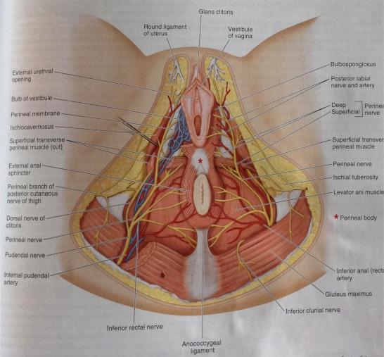 Égő csípőzsír