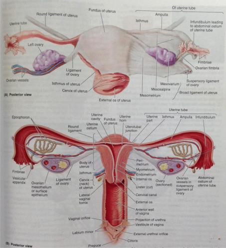 vagina POCs horney tiener sex