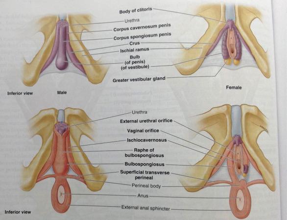 Art nude photography vagina