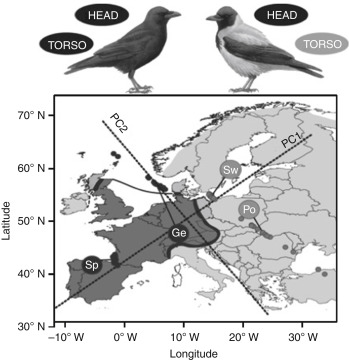 Carrion Crow An Overview Sciencedirect Topics