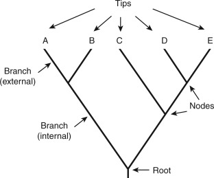 Of tree phylogenetic parts a Facts: Terminology
