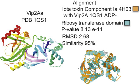 Diabrotica virgifera - an overview | ScienceDirect Topics