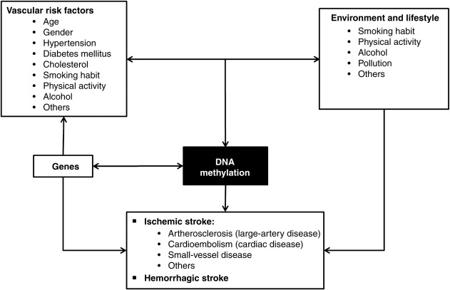 Epigenetics and cerebrovascular diseases - ScienceDirect