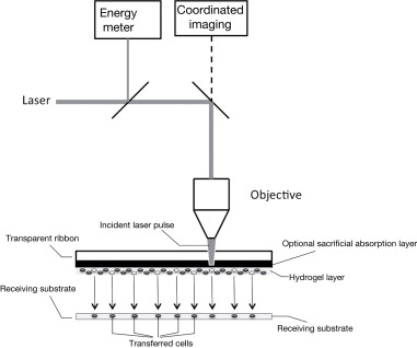 Laser Induced Forward Transfer - an overview | ScienceDirect