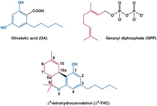 The Biosynthesis of Cannabinoids - ScienceDirect