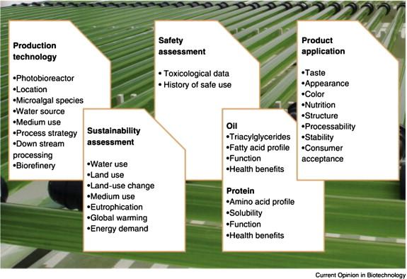 Marine Microalgae Biotechnology: Present Trends and Future Advances