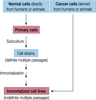 Cell Lines - an overview | ScienceDirect Topics