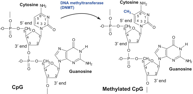 Methyl Group An Overview Sciencedirect Topics