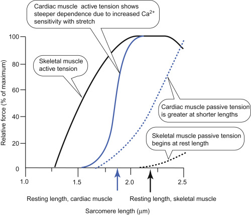 tension diagramme length tension curve an overview sciencedirect topics  length tension curve an overview