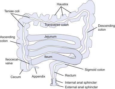 colon an overview sciencedirect topics