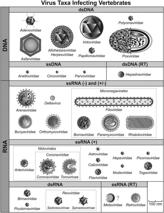 The Nature Of Viruses ScienceDirect