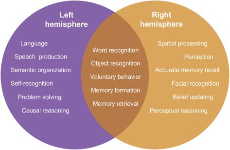 Split-Brain, Split-Mind - ScienceDirect