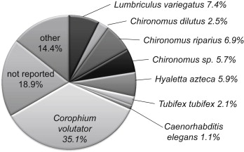 Tubifex Tubifex - an overview | ScienceDirect Topics
