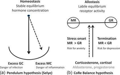 Corticosteroid Receptor Balance Hypothesis: Implications for Stress